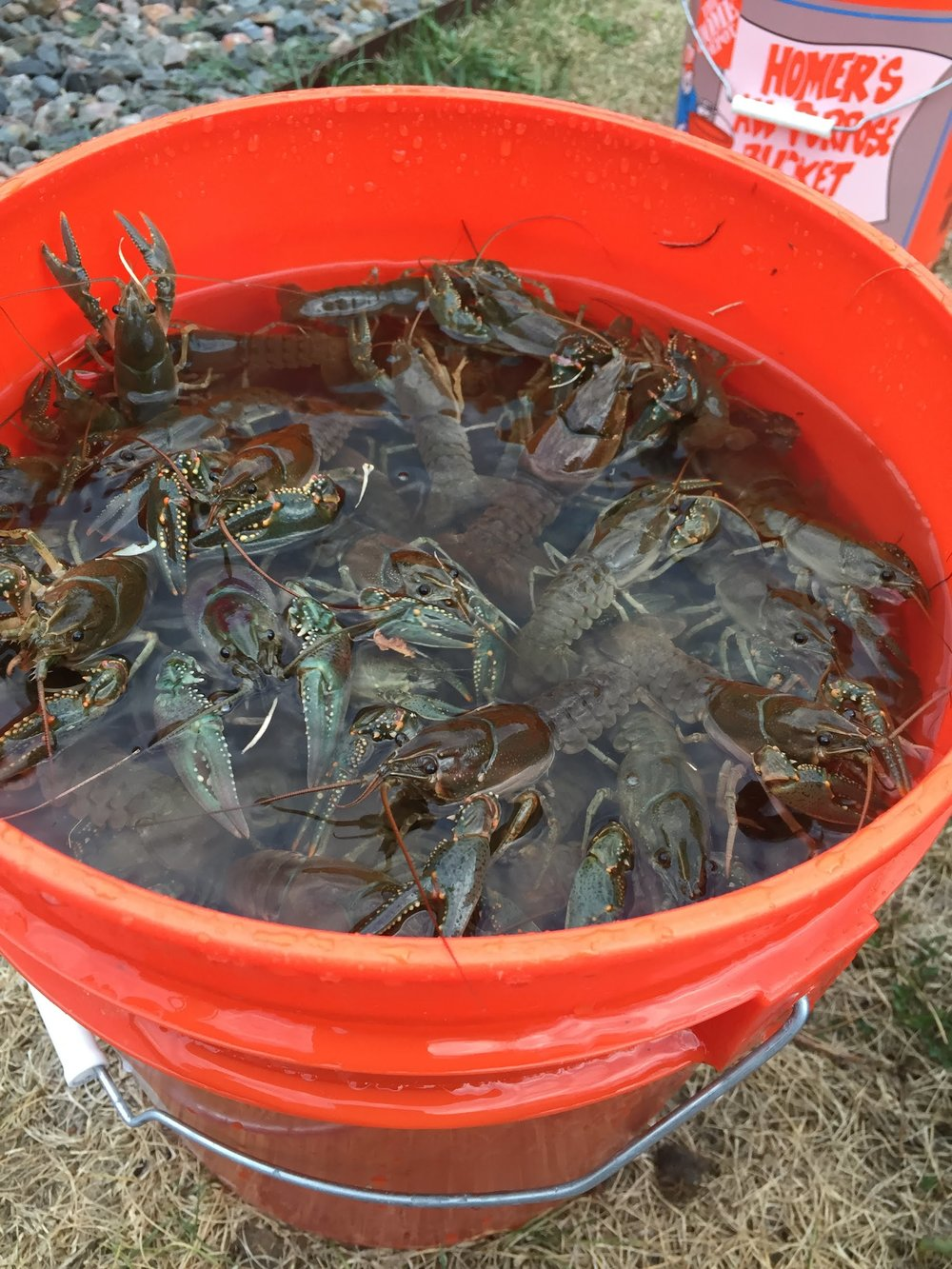 Tasty Invasive        Crawdads -