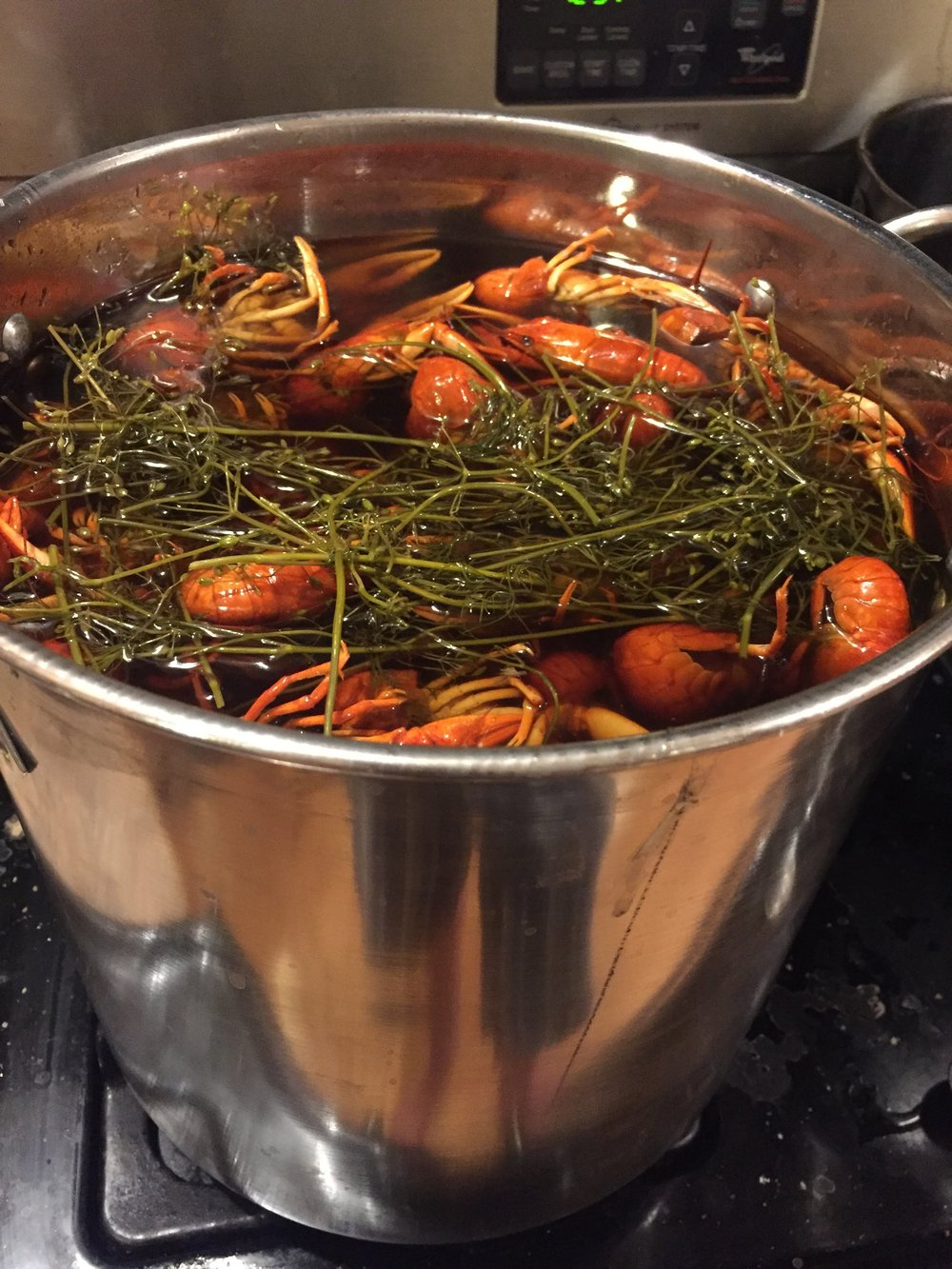 Let the crawdads rest in the beer and dill infused brine for 24h