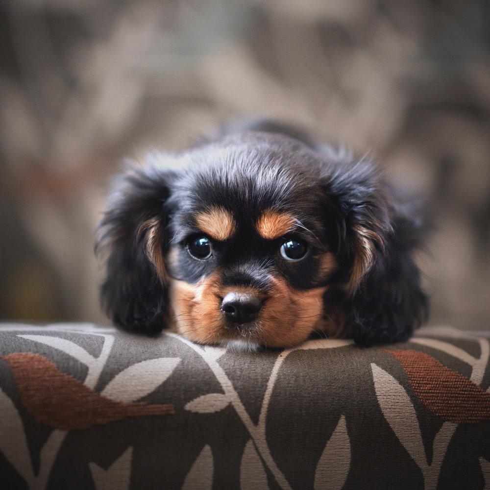 Jess Bell Photography - Toronto Pet Photographer