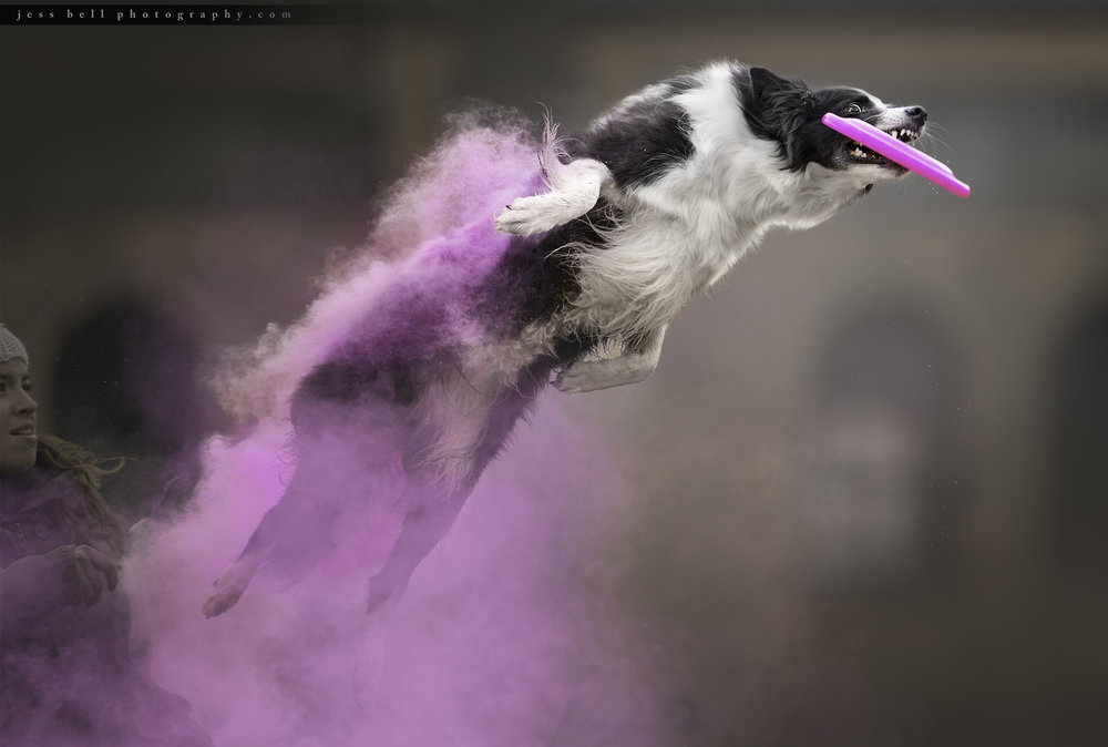 Toronto Dog Photographer, Artistic Animal Imagery