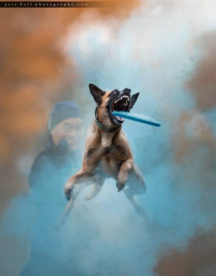 Toronto Animal Photographer, Animals in action
