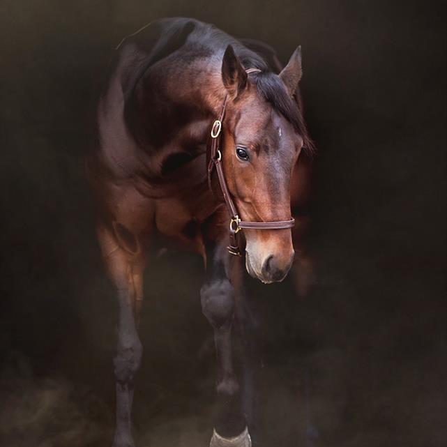 Black equine photography