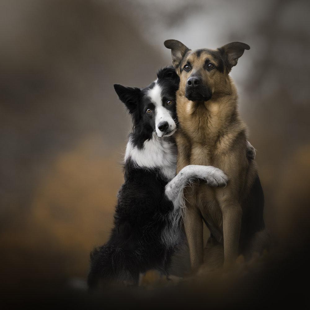 Jess Bell Photography - Toronto Animal Photographer, dog