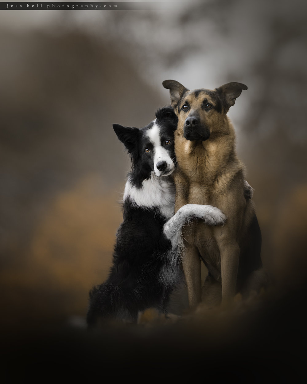 Toronto Dog Photographer Jess Bell specializes in capturing special moments.