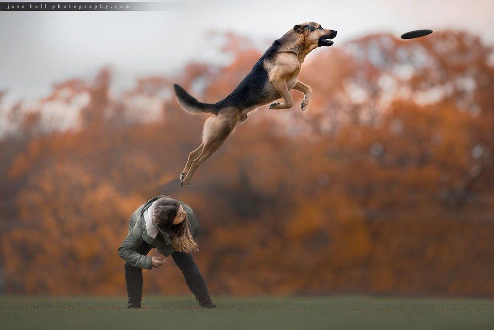Toronto Dog Sport Photography - Jess Bell Photography - disc dog
