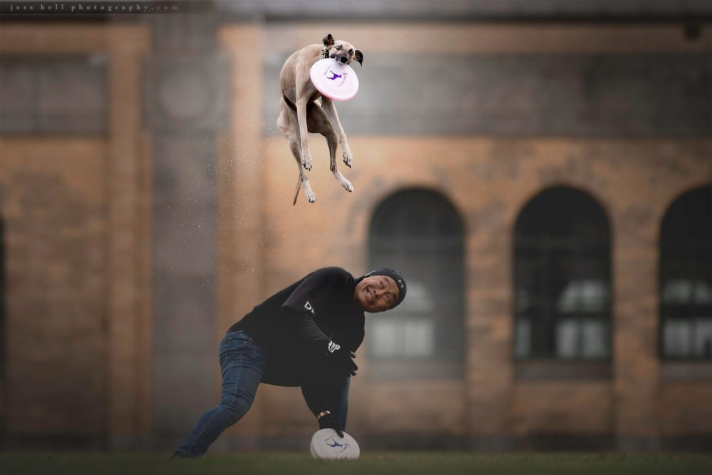 Toronto Dog Photography - Jess Bell Photography - dog sports, disc dog