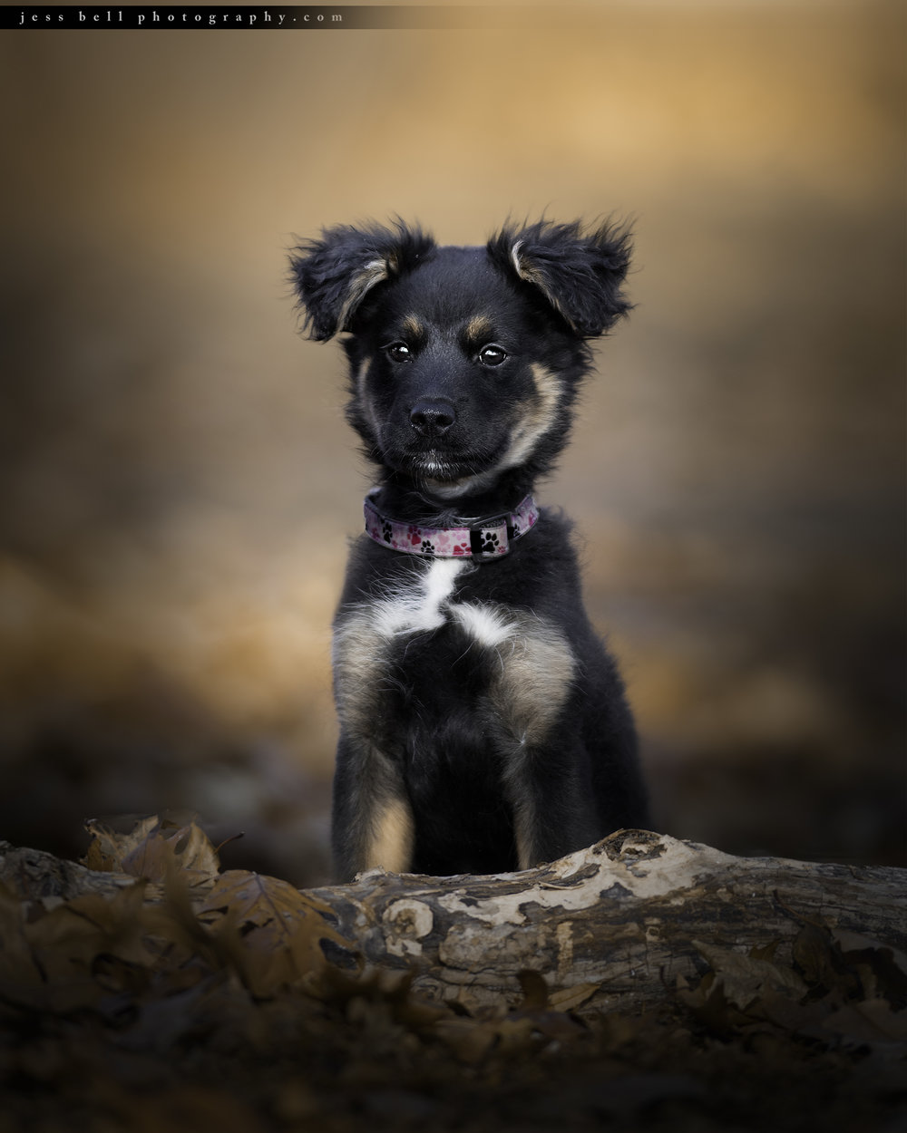Toronto Dog Photographer Jess Bell Photography - adoption spotlight