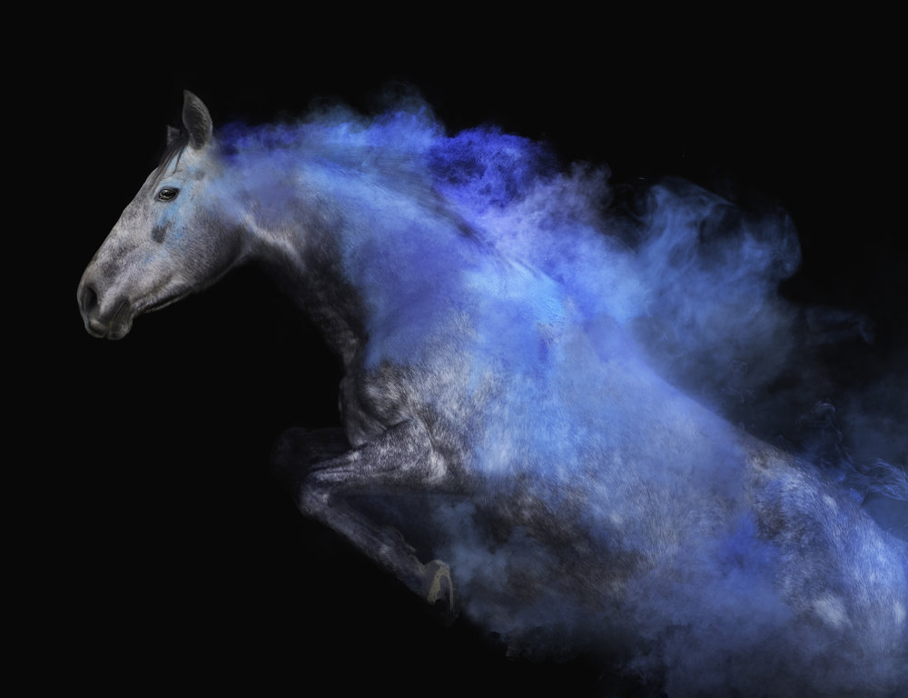 Ontario Equine Photography, Toronto Dog Photography