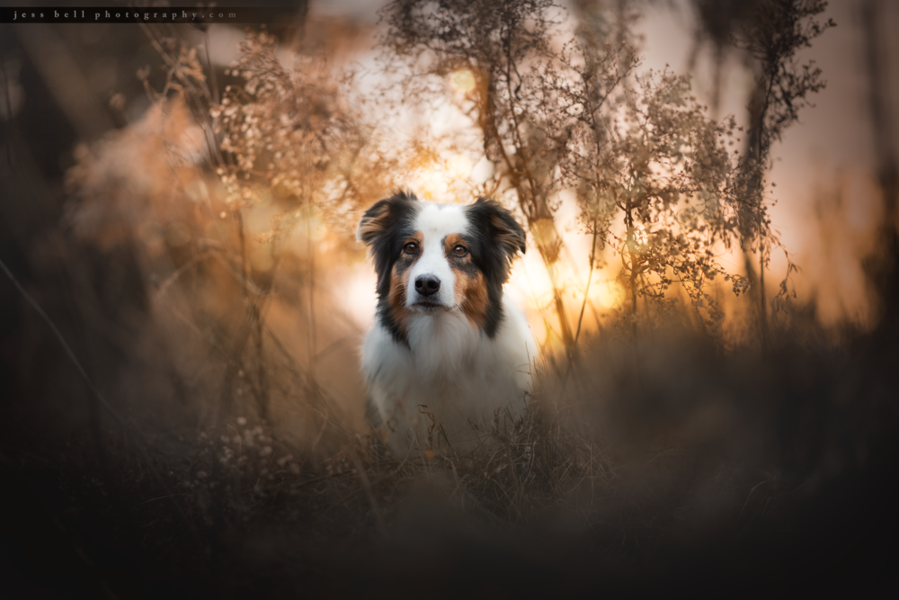 Toronto Dog Photographer Jess Bell Photography