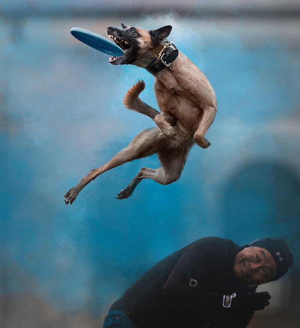 Jess Bell Photography - Toronto Animal Photography - holi action photos