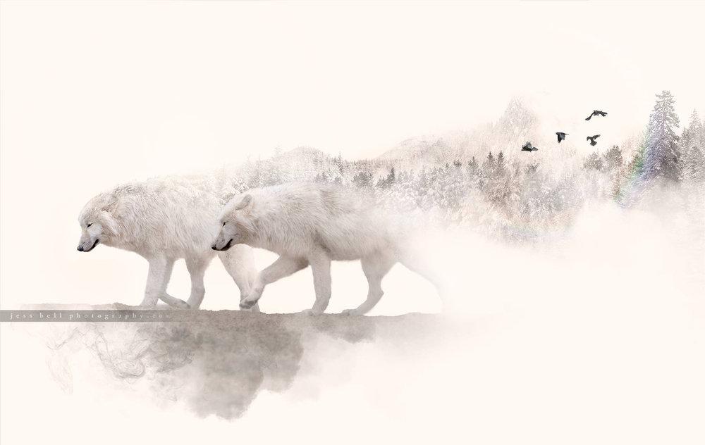 Toronto Animal Photographer Jess Bell Photography