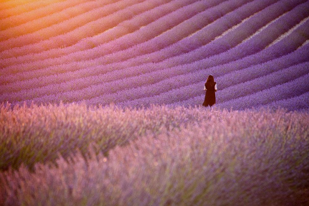 Provence lavander landscape