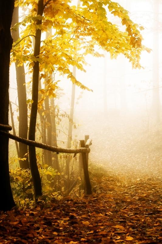 Autumn in Beigua Park, Italy