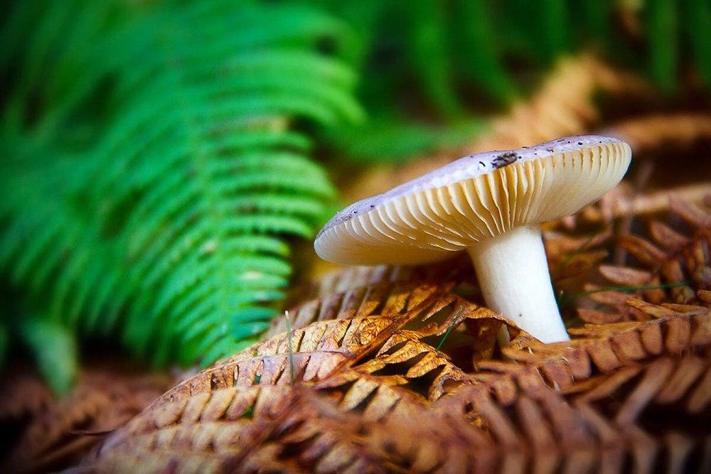 Autumnal mushrooms. Sassello, Italy
