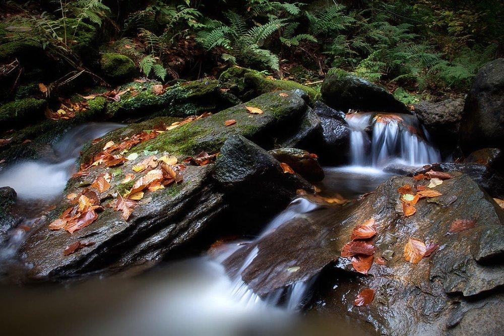 Forest creek near Palo, Italy