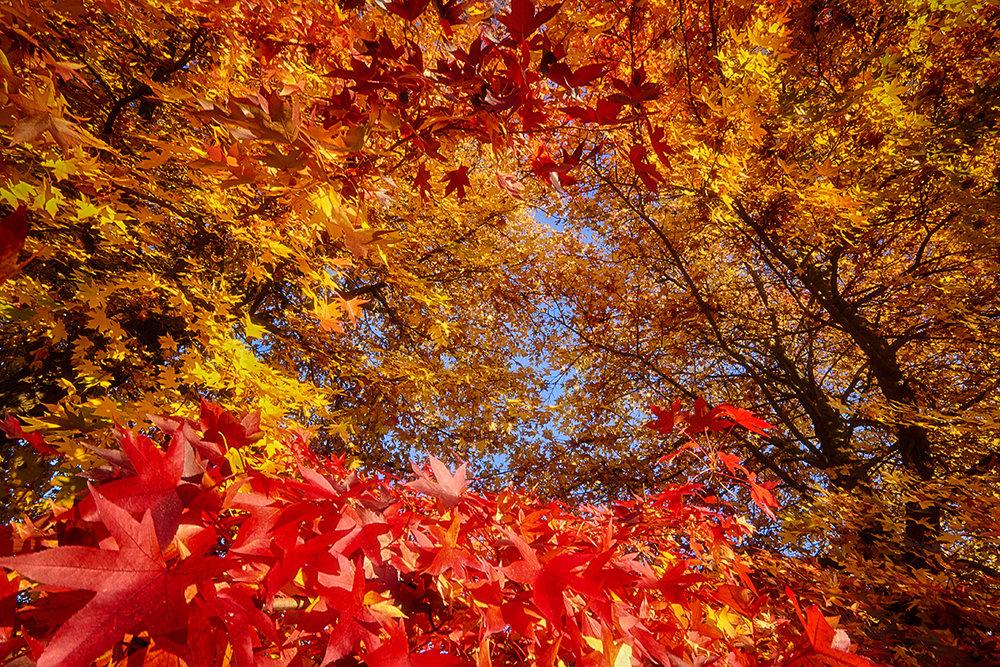 Autumn Colorful