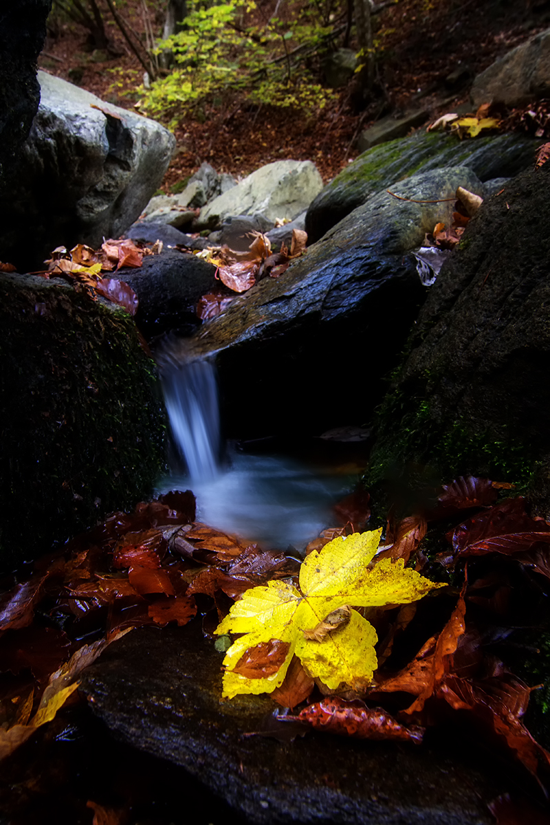 Autumn in Beigua Park