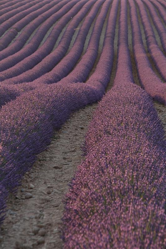 Valensole - Provence, France