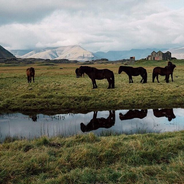 Horses, glaciers and abandoned houses. Iceland has it all 🐎 . . . . . . . . . . #icelandichorse #icelandichorsesofinstagram #fujifilmx100s #fujifilm #fujifilmnordic #travelmore #exploreeverything #thisisiceland #fromwhereidrive #nspiration #welltraveled #bestdestination #bluecarrental #globe_visuals #traveleverywhere #passionpassport #neverstopexploring #beentheredonethat #bucketlisters #worldvisuals #visualsoflife #visualsofearth #visualsmovement #horsesofinstagram #horseworld