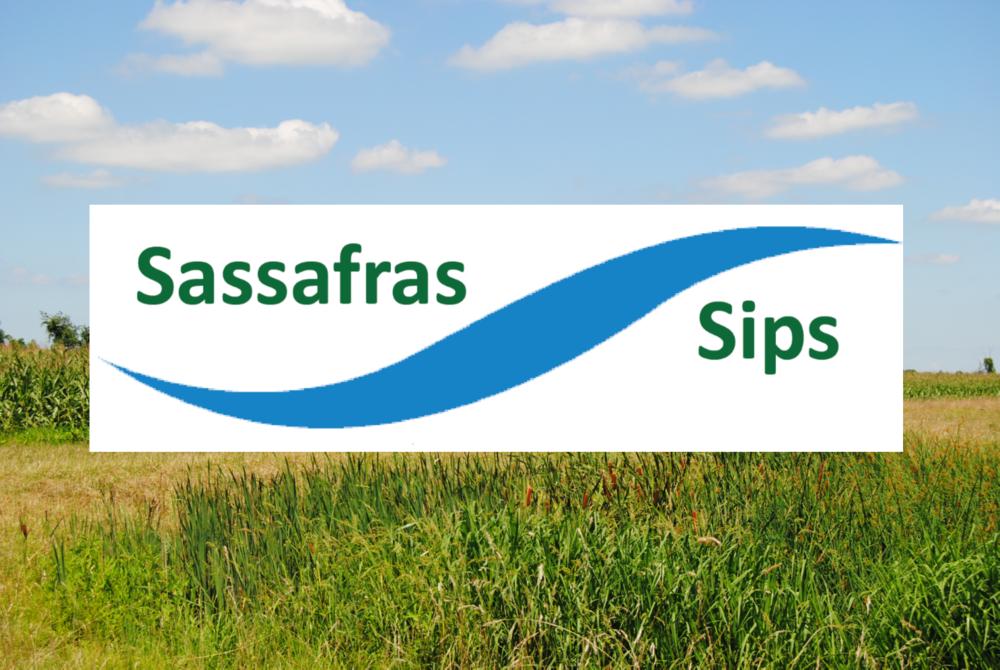 Sassafras Sips.png