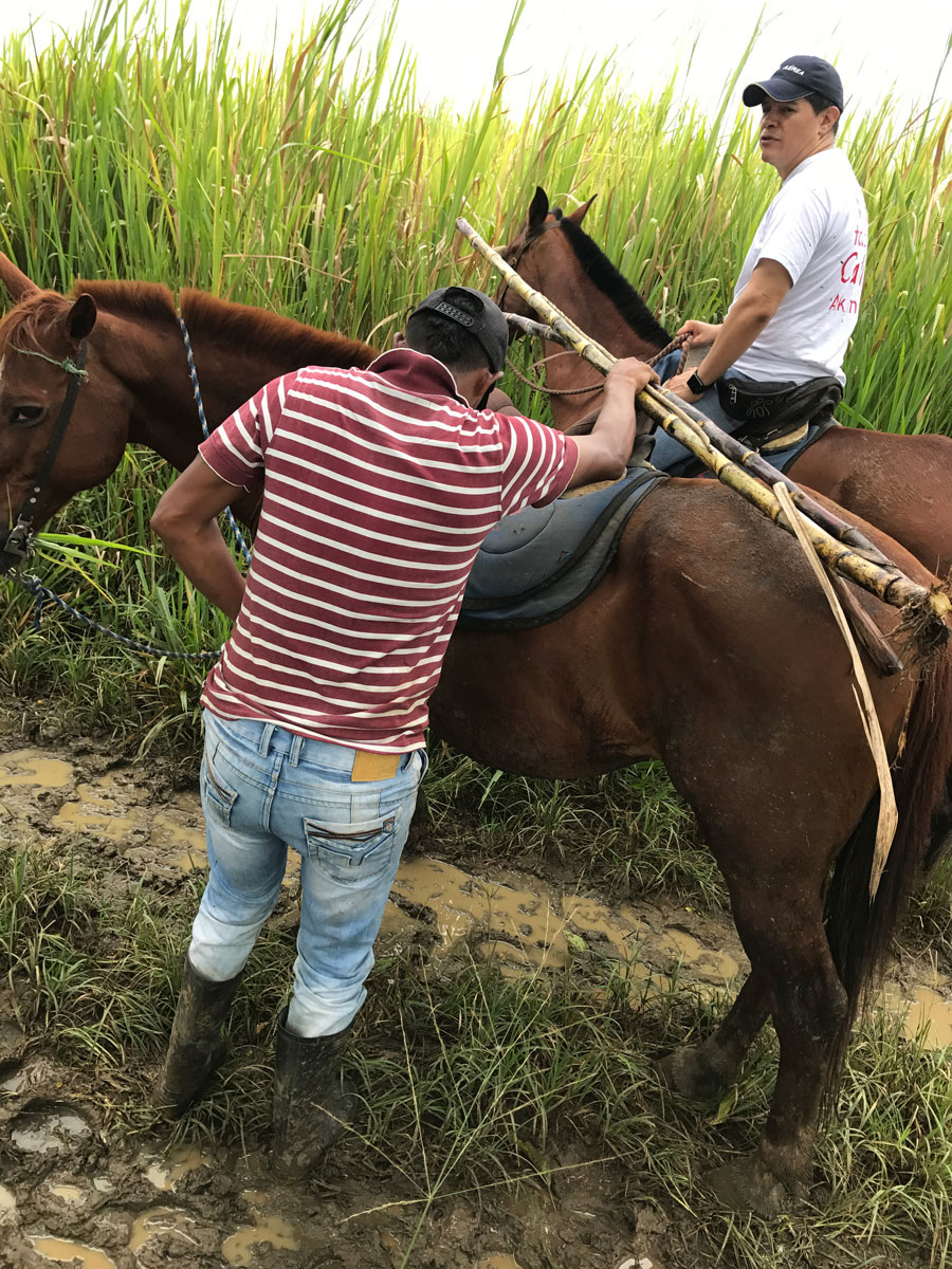 Sugar cane collecting