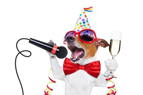 party dog friend new year.jpg