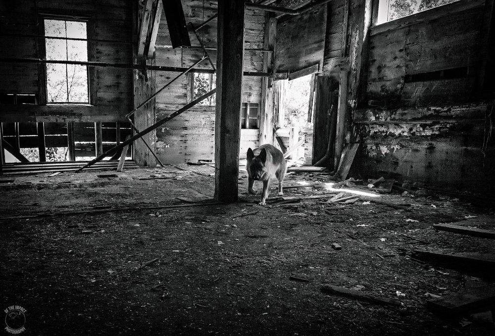 bw abandoned.jpg
