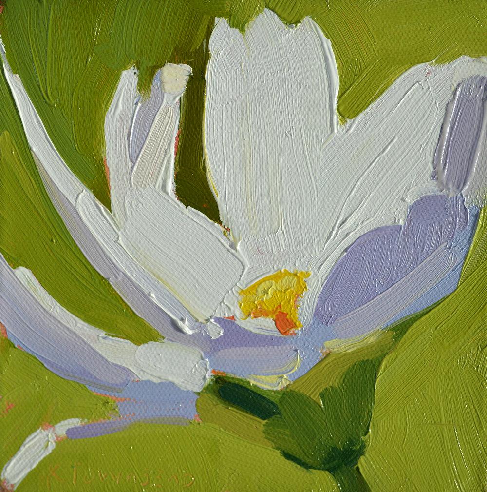 Flower Study - White Daisy
