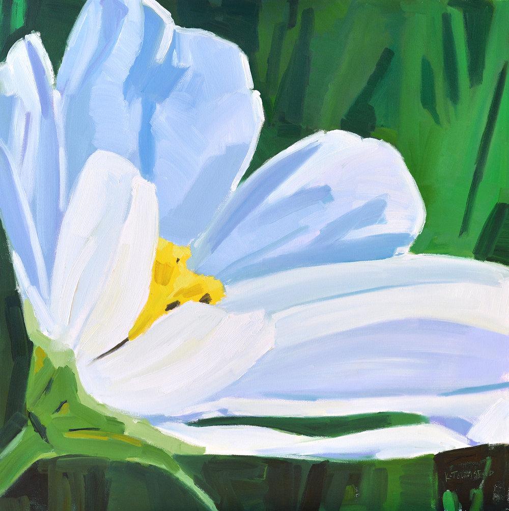White Daisy Reaching