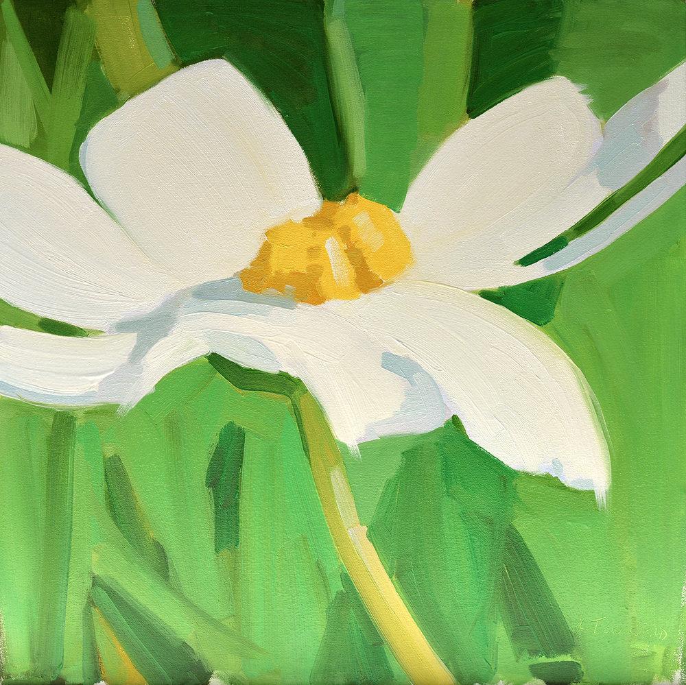 White Daisy Dancing