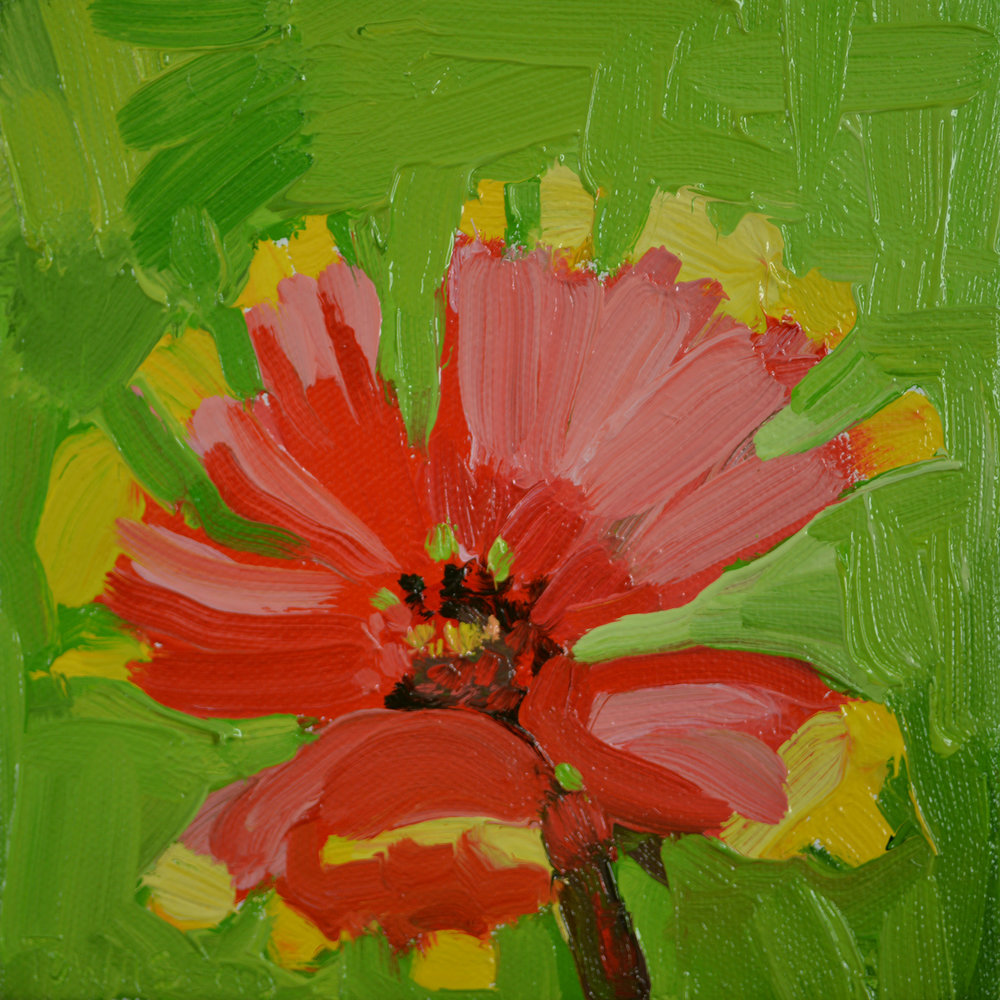 Red Cosmos Study