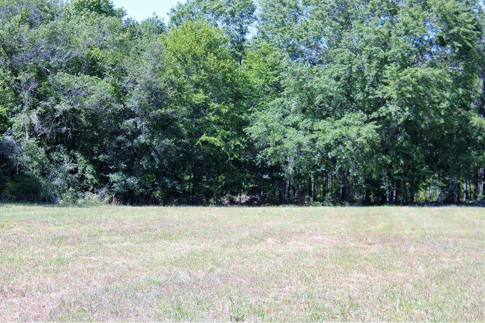 82 ac Hardwoods on Property2.jpg
