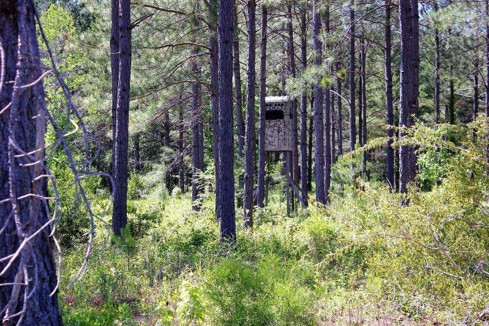 82 ac Hunting on Property2.jpg