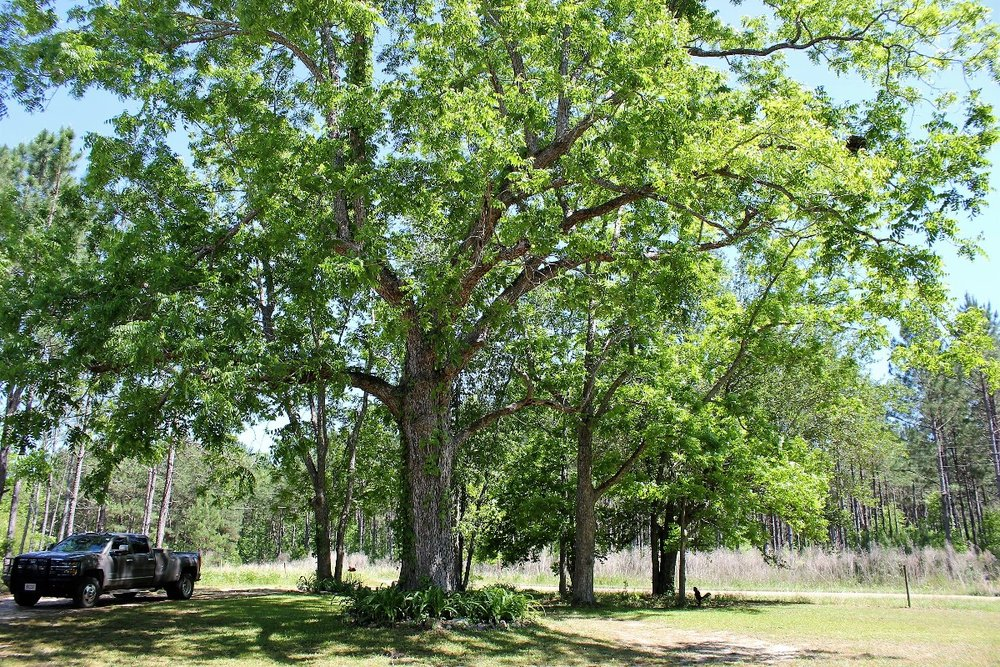 82 ac Large Pecan Tree in Front yard2.jpg