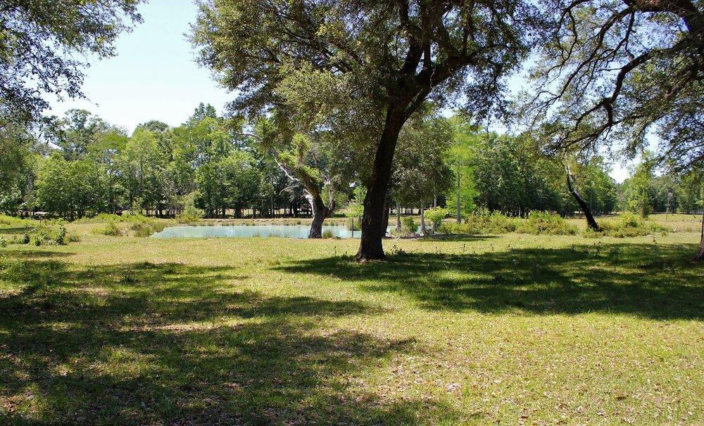 Pasture with Pond2.jpg