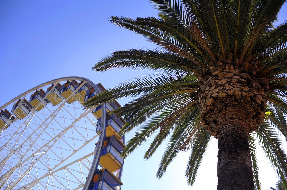 county fair ferris wheel and palm tree.jpg