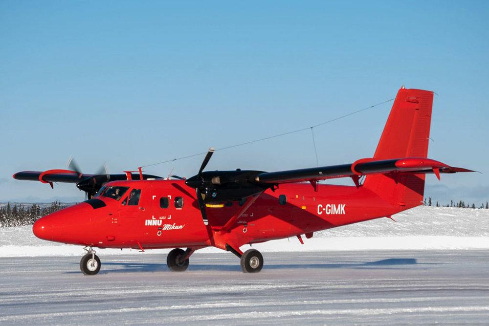 Pinemarten Photo © Goose Bay, NL Dec-2012