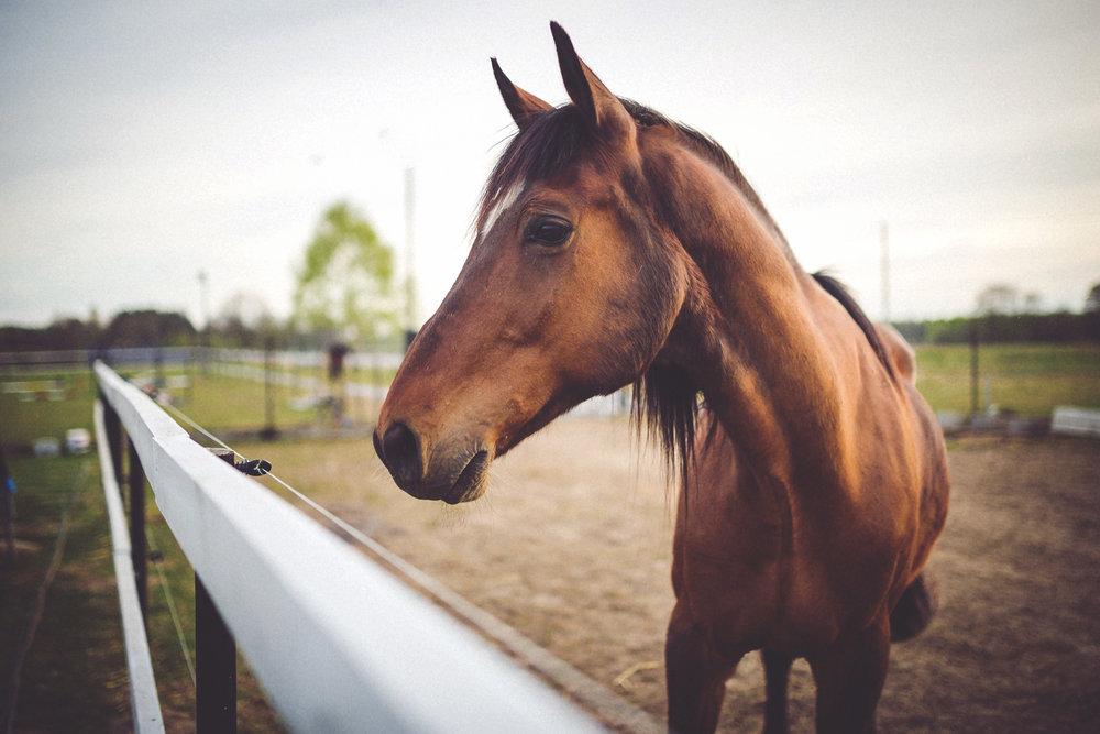 AMA-Asheville-Services-Horseback.jpg