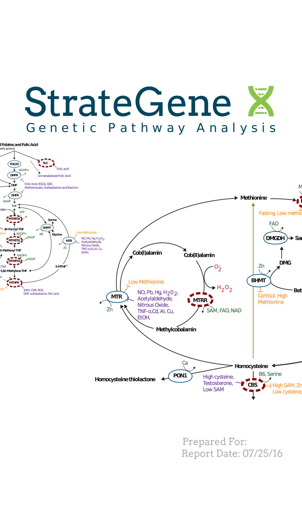 Strategene Genetic Pathway Analysis - -Professional report that is meant to be reviewed with a healthcare provider that is familiar with genetic SNPs.-However this report can be downloaded directly by anyone. If you have a lot of knowledge about genetic SNPs you might be able to interpret it yourself.-Unlike the nutrition, fitness, or disease risk reports above, this report just looks at specific metabolic pathways and what SNPs you have on those pathways