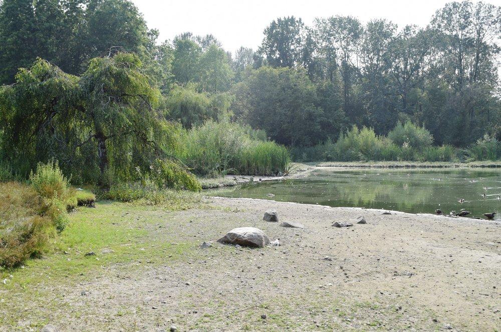 jericho beach park marsh