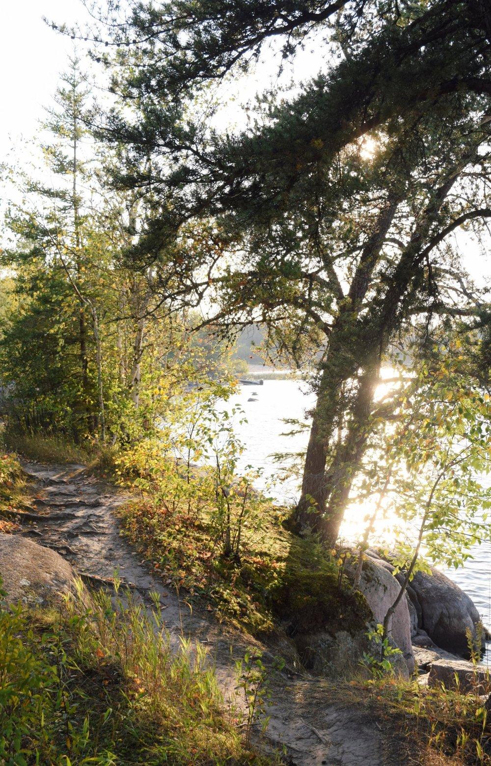 nutimik lake view through trees at golden hour
