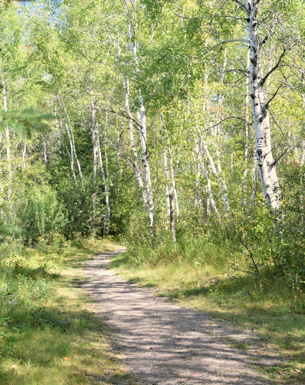 walking trail through forest of birch trees at nutimik lake