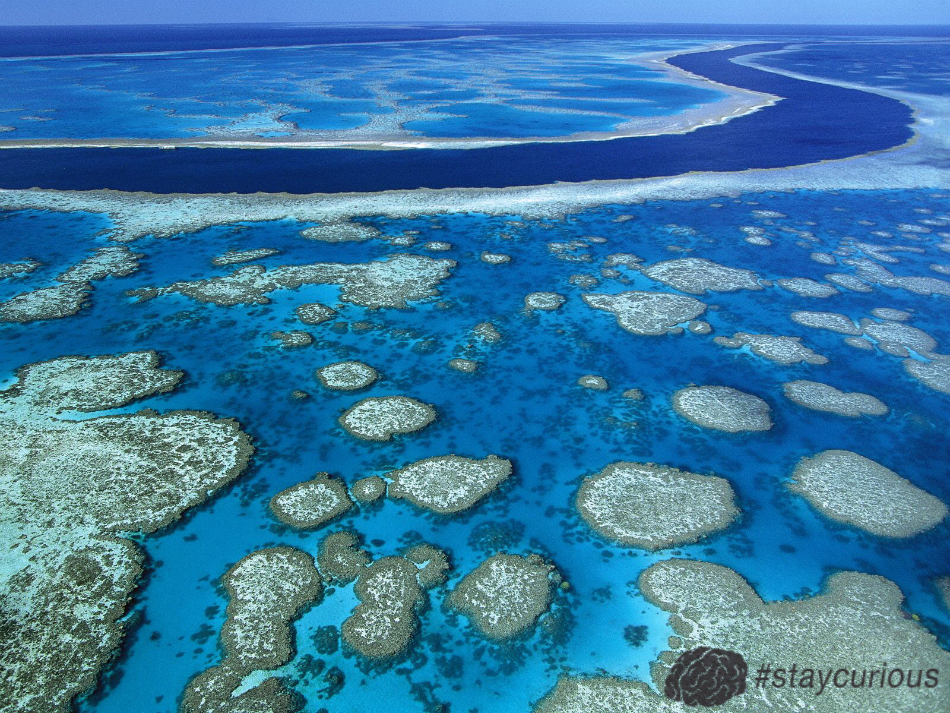 The Great Barrier Reef Can Be Seen From Outer Space And Is