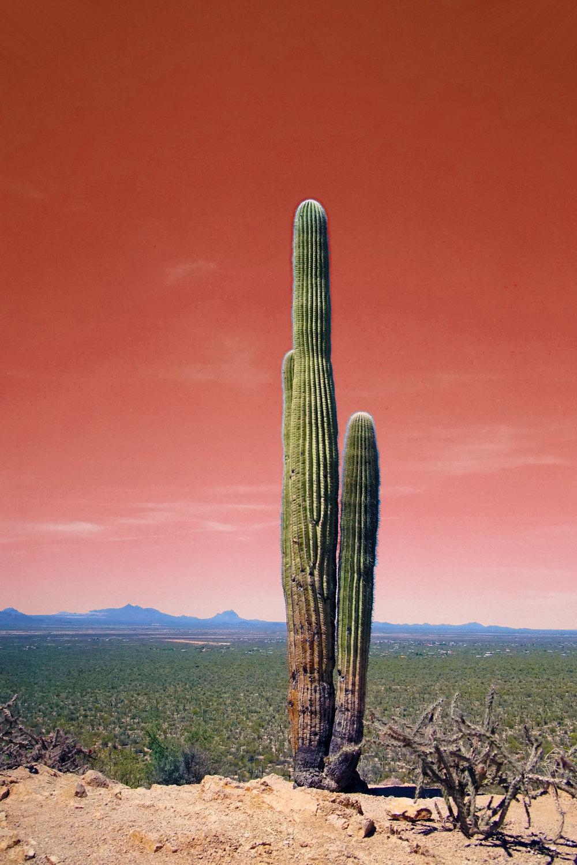 Saguarro National Park by Araya Jensen