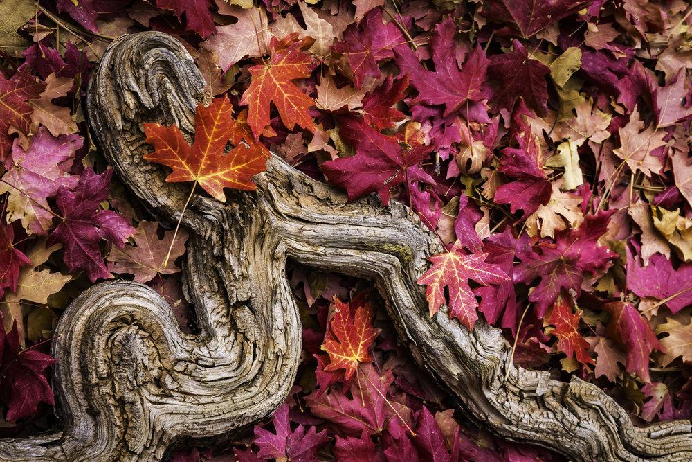 Autumn's Surrender