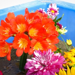 20150316-Preschool-Flowers_0776_Edit-245x245.jpg