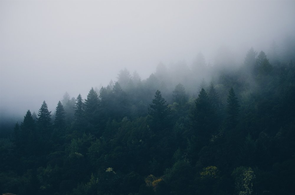trees-1209660_1920.jpg