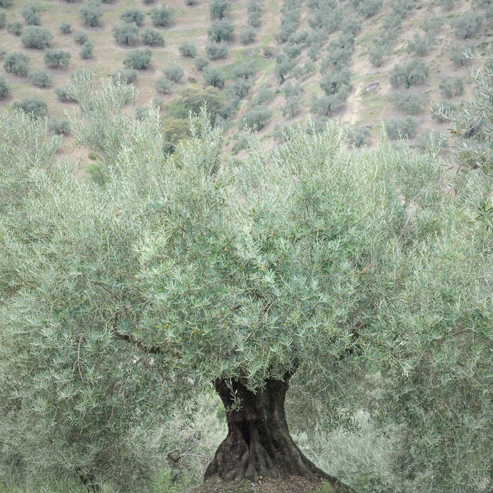 DREAMING ANDALUSIA, SPAIN - 6th - 14th April 2019