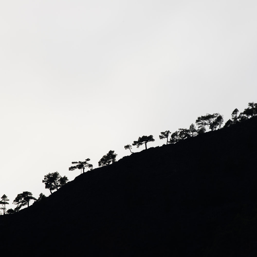 Mysterious and graphical representation of minimalism in the forest - La Palma island , Rafael Rojas.jpg