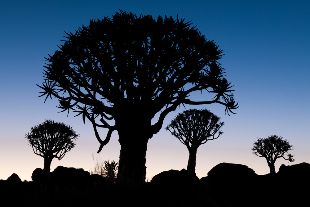 Example of playing with Silhouettes - Namibia, Rafael Rojas.jpg